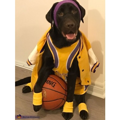 lakers jersey kobe bryant for dogs